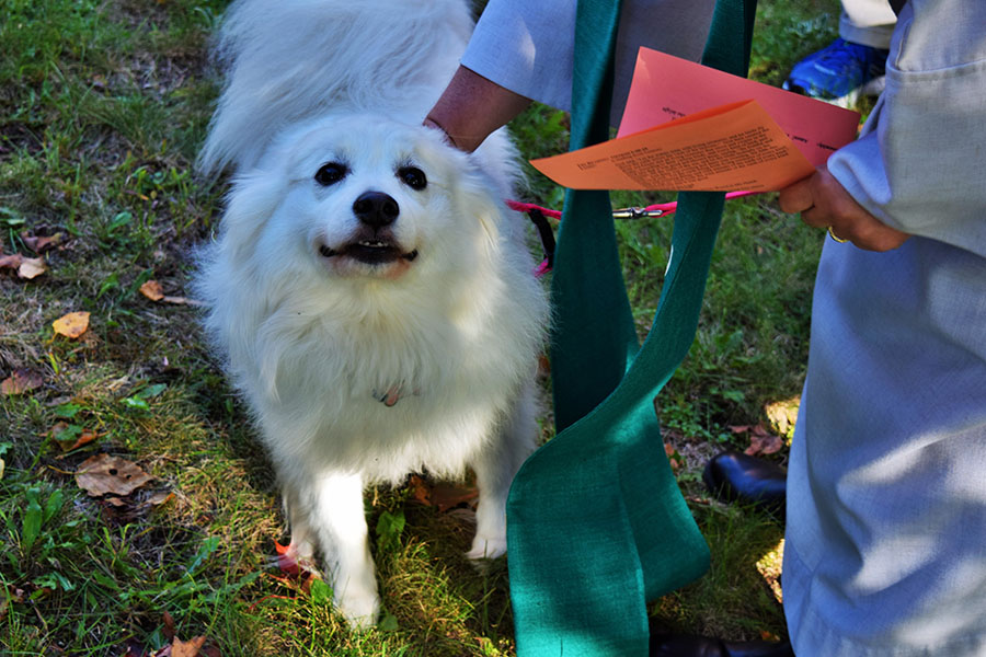 Blessing of the Animals 2018 « Emmanuel Lutheran Church of